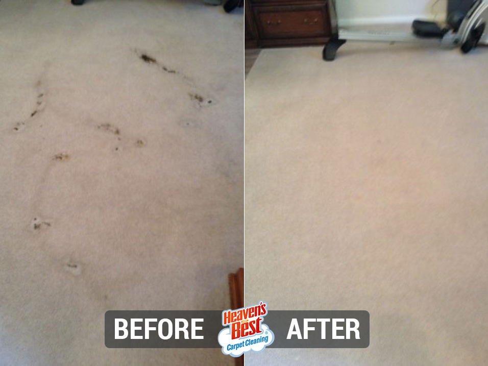 Heaven's Best Carpet Cleaning Round Rock TX