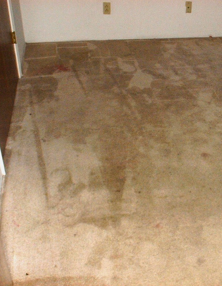 Carpet Cleaning Before Amp After San Joaquin County Elk
